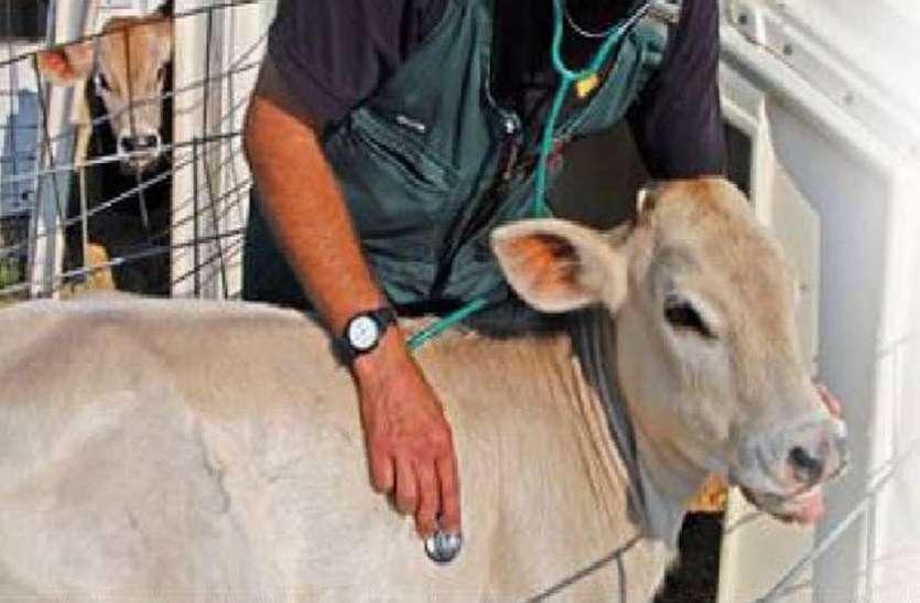 भारतीय सेना : पशु चिकित्सक पदों के लिए निकली भर्ती, ऑफलाइन करने होंगे आवेदन