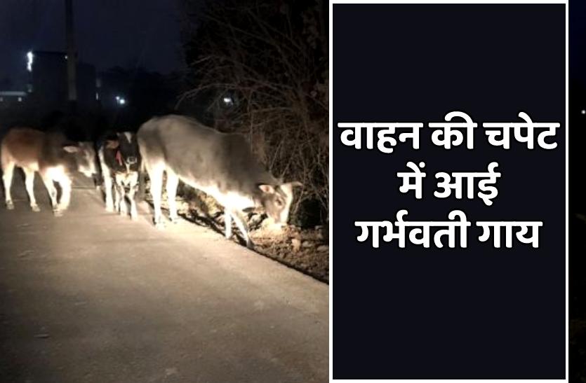 बोरिंग वाहन की चपेट में आई गर्भवती गाय की मौत, हिंदूवादी संगठनों ने की तोड़फोड़