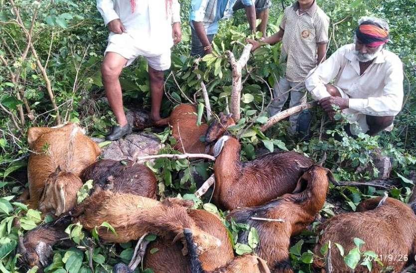 आकाशीय बिजली गिरने से 14 बकरिया की मौत