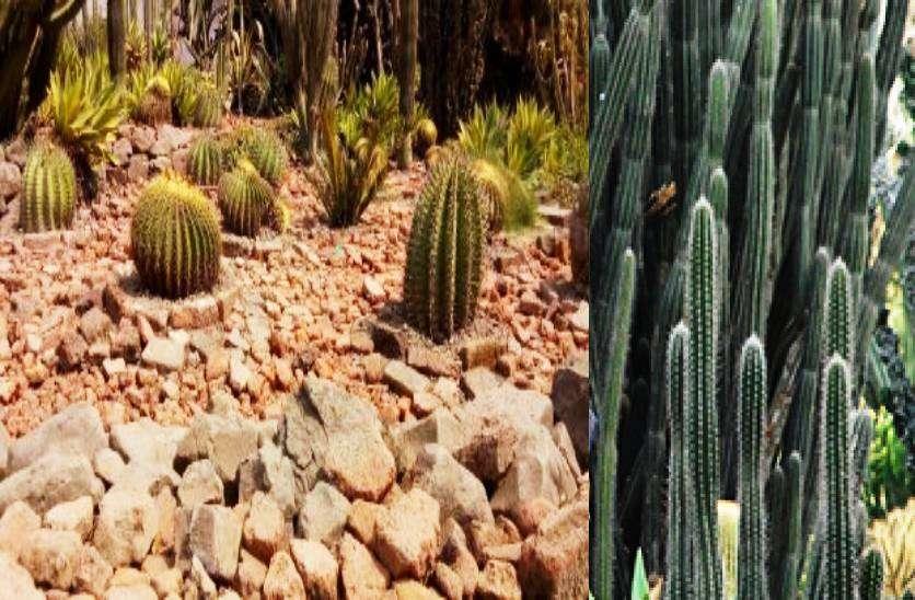 ratlam_cactus_garden__1.jpg