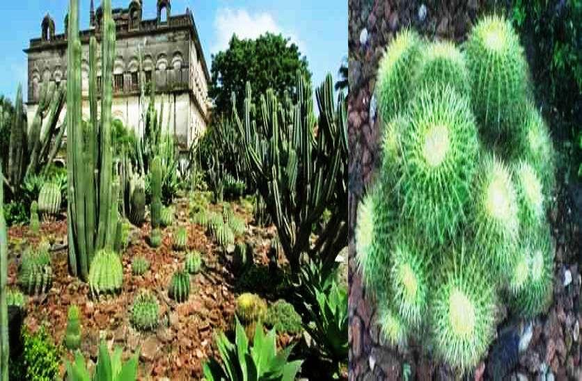 ratlam_cactus_garden__4.jpg