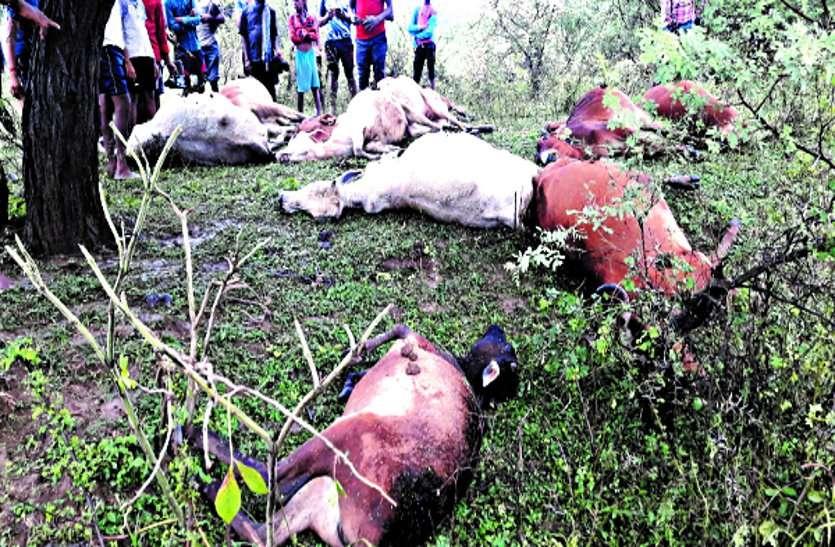 आकाशीय बिजली गिरने से राजनांदगांव में युवक और 10 गायों की मौत, बेमेतरा में खेत पर काम कर रही 8 महिलाएं बेेहोश