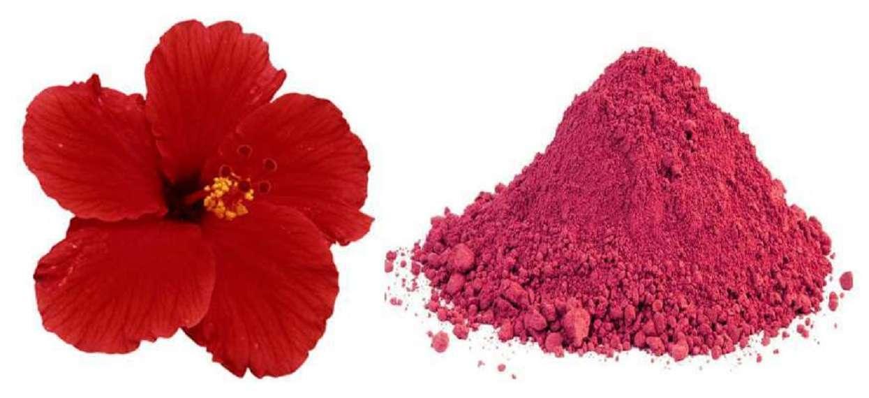 Hair benefits Of Hibiscus: बालों के ग्रोथ के लिए कर सकते हैं गुड़हल के फूल का इस्तेमाल,जानिए इसके फायदे