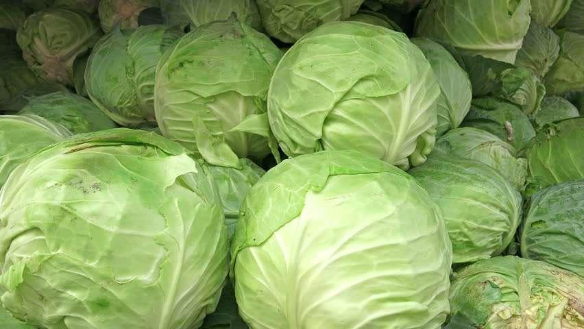 cabbage_veg.jpg