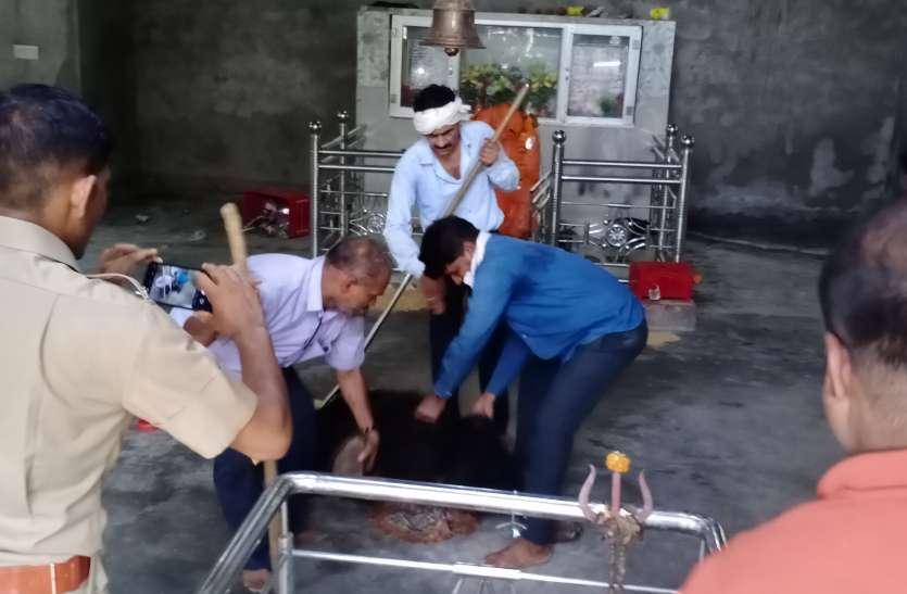 हनुमान मंदिर में घुसा भालू, ग्रामीणों ने नहीं करने दिया ट्रेंकुलाइज