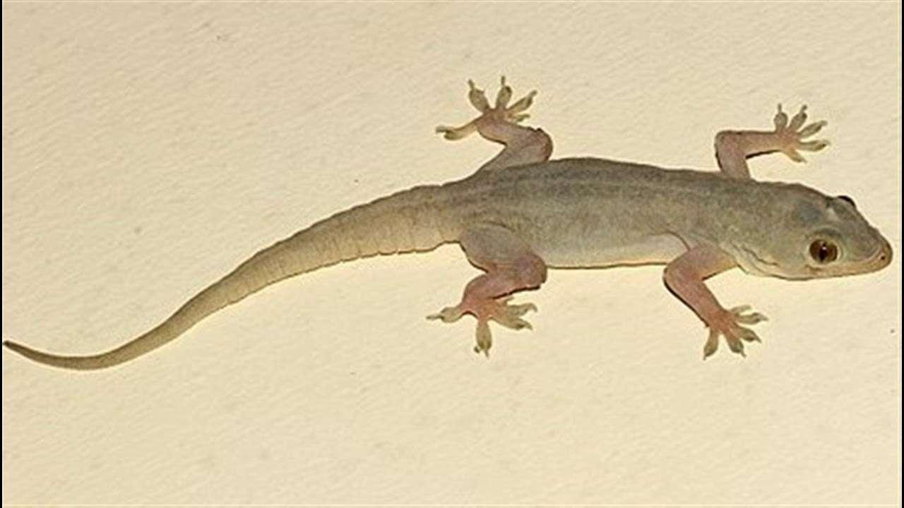 lizard-33.jpg