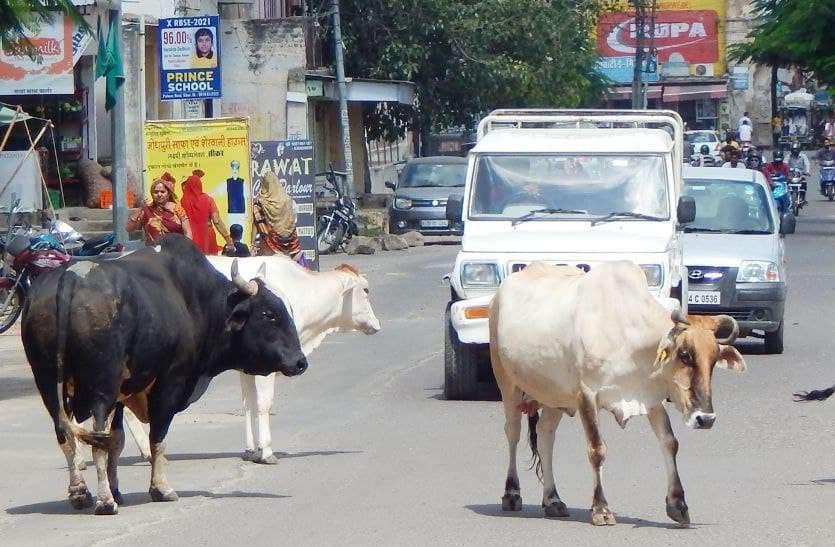 पत्रिका पड़ताल: सरकार के पास जमा है गायों के 721 करोड़