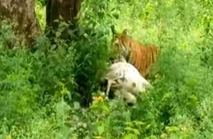 इसलूरु गांव में दिखा तेंदुआ, लोगों में भय