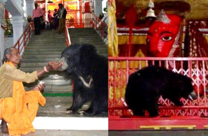 Navratri 2021: नहीं देखें होंगे ऐसे अनोखे भक्त: माता के इस मंदिर में आते हैं भालू, आरती में होते हैं शामिल