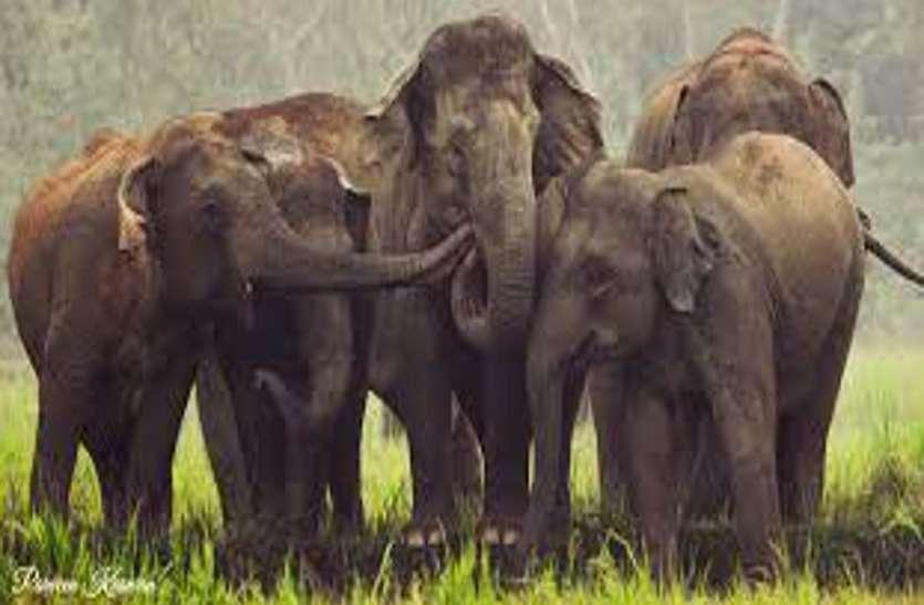 Exclusive: कोरिया से निकली नदी हसदेव के नाम से 40 हाथियों के दल की होगी पहचान