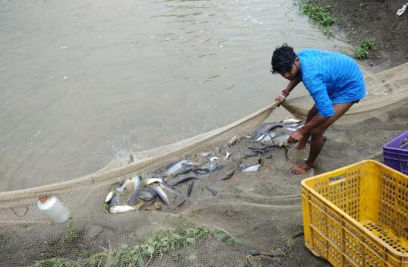 कोरोना के बाद बढ़ी मछली की डिमांड, स्व सहायता समूह की 36 हजार महिलाओं को रोजगार देने पंचायतों के 20 तालाबों में पाली जाएंगी मछलियां