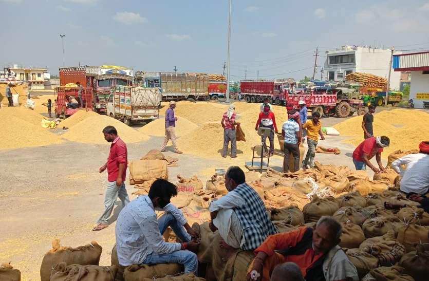 विदिशा और सीहोर की धान से मंडी में आई रौनक