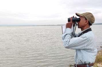 सांभर झील:पानी की आवक बढ़ी तो पक्षियों में हुई बढ़ोतरी, 6 विदेशी प्रजातियों का आगमन