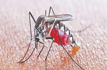कोटा में डेंगू के नए 28 रोगी सामने आए