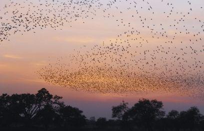 साइबेरियन पक्षियों का छड़वा डैम पर जमावड़ा