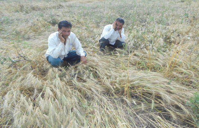 होली में अन्नदाताओं की फसलों को न करें नष्ट