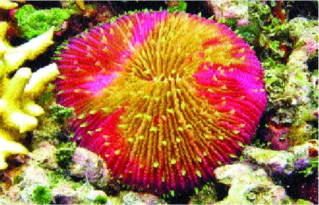 MP में 30 लाख सालों तक था समुद्र, मिले 8 करोड़ साल पुराने समुद्री जीव के जीवाश्म