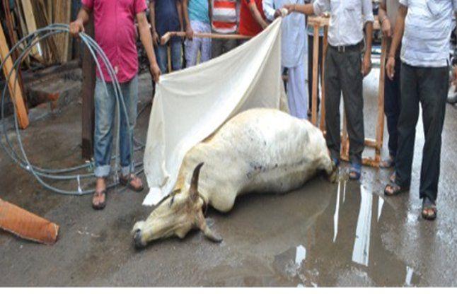 Current Seemingly Killed Two Cows - करंट लगने से दो ...