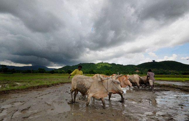 पांंच सालों में एक लाख किसानों ने छोड़ी खेती