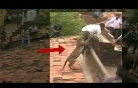 मलेंडी में दो शावकों के साथ दिखी मादा तेंदुआ, गांव वालों को किया अलर्ट