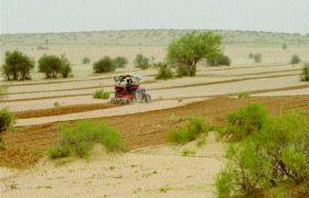 डेजर्ट नेशनल पार्क में की जा रही खेती