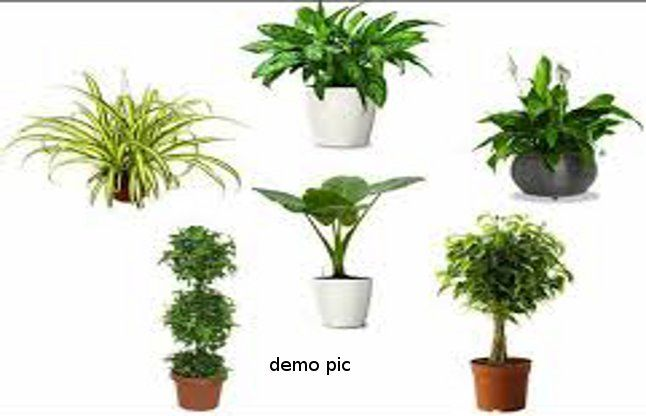 14 for Low maintenance air purifying plants