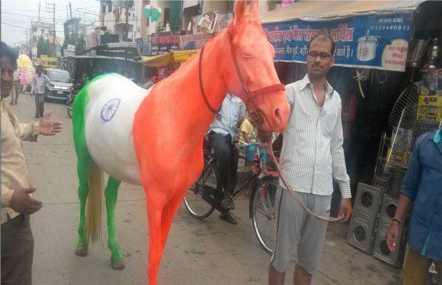 तीन रंगों वाली घोड़ी देख सब बोले वाह...।