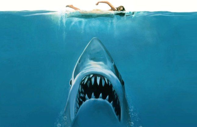 शार्क ने काटा, फिर भी लड़की ने दोबारा जाकर दोस्त को बचाया