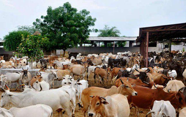 विदिशा में खुलेगा पशु सहायता केन्द्र