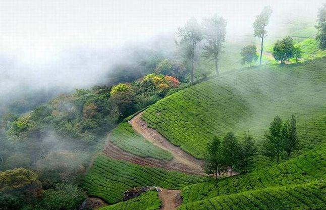 Paradise Of Earth Munnar Hill Station - स्वर्ग सा है केरल का मुन्नार हिल  स्टेशन | Patrika News