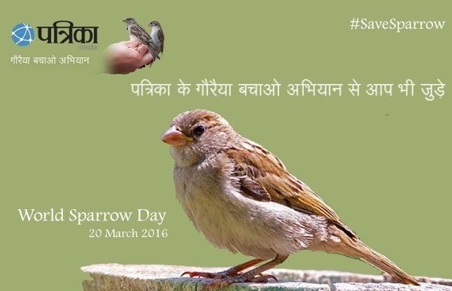 #savesparrow इनके आंगन में इसलिए आती है गौरैया