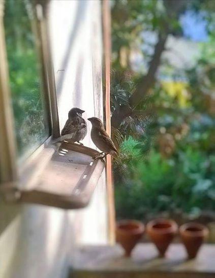 #World Sparrow Day : यहाँ सालों से  गौरैया को कैद से आजाद करने में जुटा गौरैया का जोड़ा