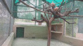 44 डिग्री तापमान में ANIMAL और BIRD पर अत्याचार!देखिए वीडियो और फोटो