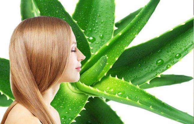 Aloe Vera Gels With Camphor Hindi News, Aloe Vera Gels With