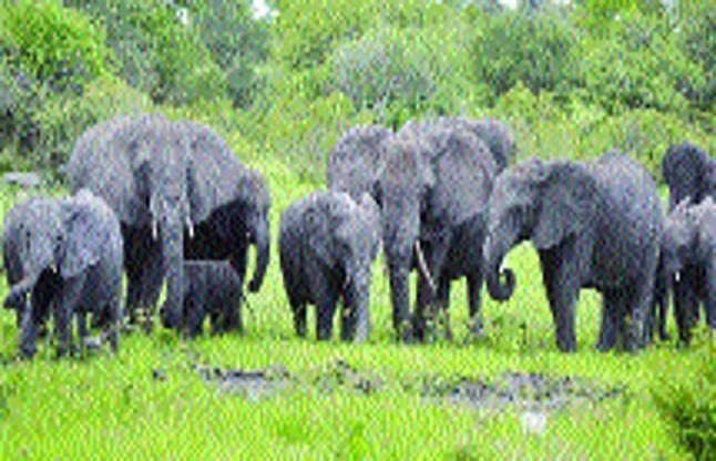 कोयम्बत्तूर जिले में एक और वन रेंज