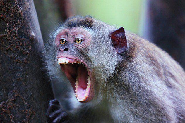 उत्पाती बंदर बने युवक की मौत का कारण