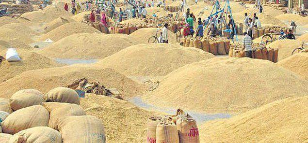 किसानों से सीधे धान खरीदेगी सरकार, जनपद में 101 क्रय केन्द्र खोले जाएंगे