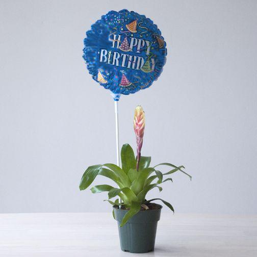 यहां पेड़ का मनाया जाता है जन्मदिन, कटता है केक! दे रहे हैं हरियाली का संदेश
