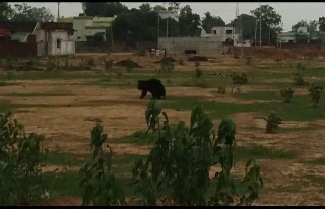 जंगली भालू ने 12 से ज्यादा लोगों को किया घायल, वन विभाग ने मारी गोली