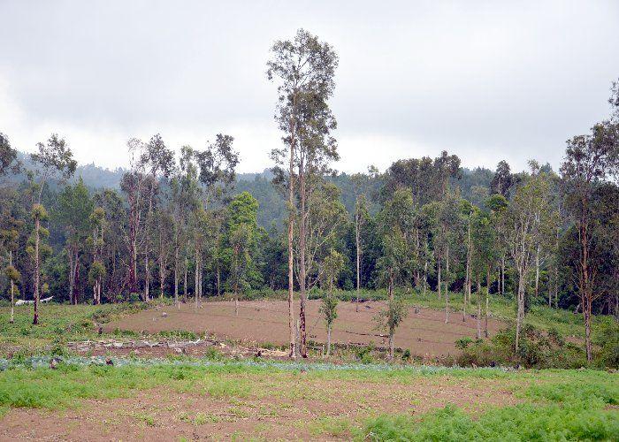 25 साल में खत्म हो गए 10 प्रतिशत जंगल
