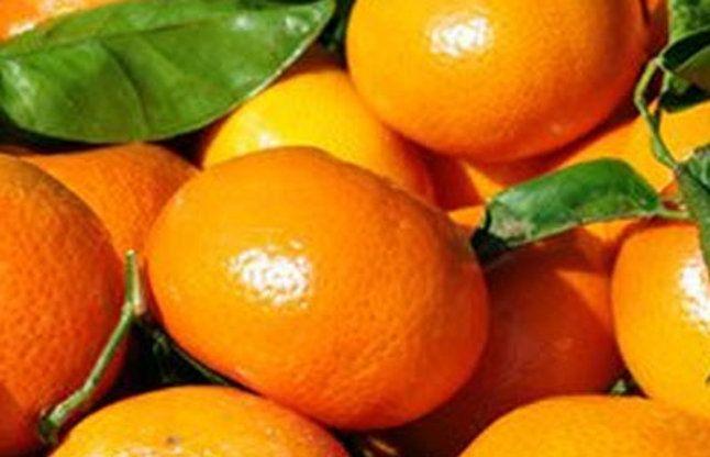संतरे की फसल पर मौसम की मार, जानें आगे क्या होगा