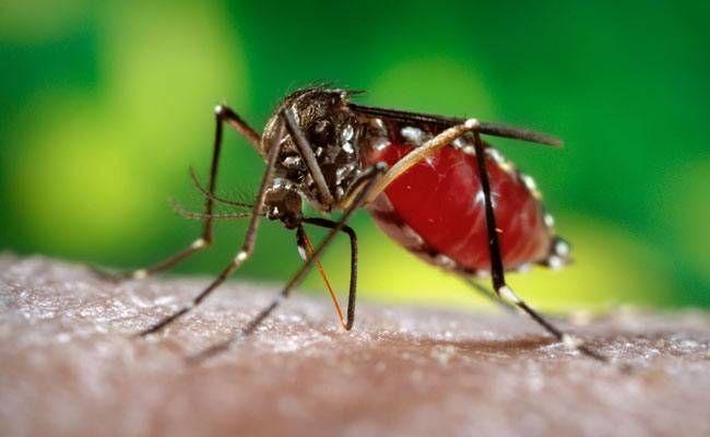 डेंगू का कहर जारी, अबतक 40 मरीज आए सामने