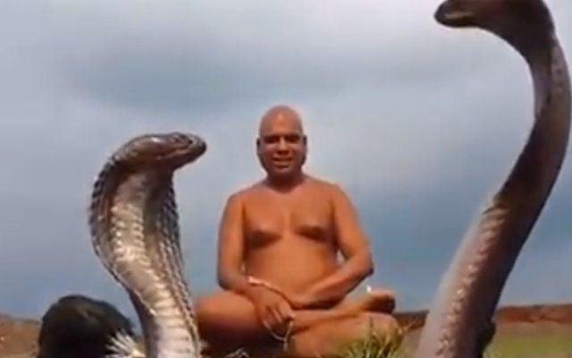 Snake pair attends Jain muni speech, Watch Viral Video