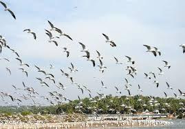 अप्रवासी पक्षियों के लिए इलाहाबाद में बनेगा बर्ड सेंचुरी