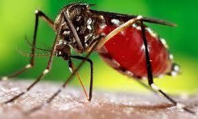 डेंगू का कहर जारी, तीन और मरीज सामने आए