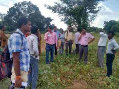 कृषि विभाग की टीम ने किया फसलों का निरीक्षण