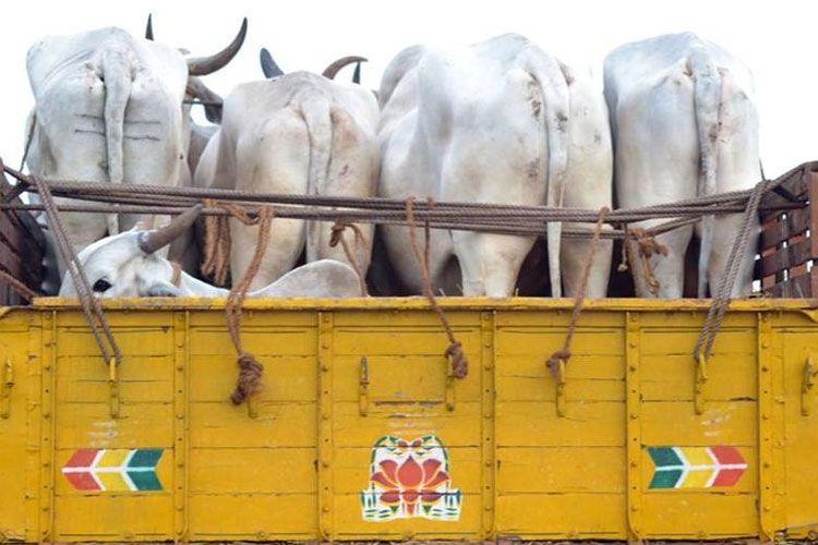 ट्रक में बेरहमी से भरे गए थे मवेशी