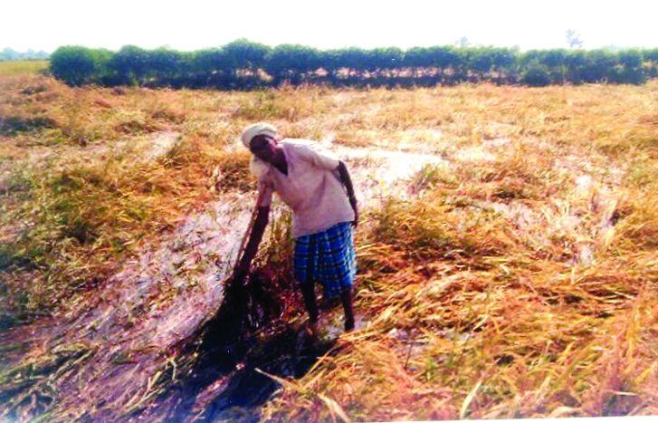 आंधी-तुफान और मूसलाधार बारिश ने बर्बाद कर दी 1000 एकड़ की फसल