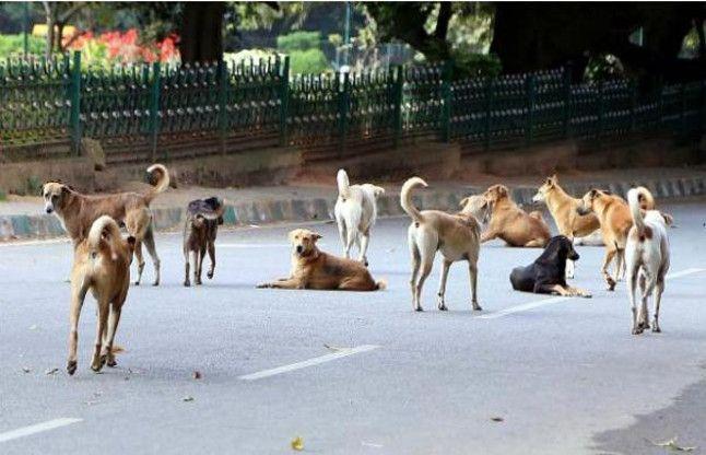 कुत्ते ले रहे लोगों की जान, डीएम ने लगाई एसडीएम की क्लास