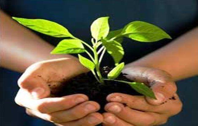 शहरीकरण की बलि चढ़ रहे पेड़ पौधे-रज्जाक मोल्ला